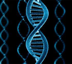 """Ученые опровергли теорию """"мусорной ДНК"""""""
