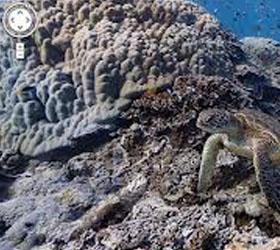 В сервис Street View Google добавит панорамы коралловых рифов