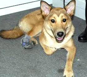 В Москве было заведено уголовное дело по факту отравления собак