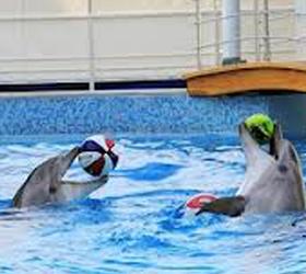 Самый крупный дельфинарий в России откроется в Сочи
