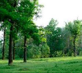Заблудившихся детей из Новгородской области сегодня спасли на вертолете