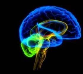 Строение мозга влияет на лишний вес
