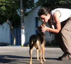 Ученые пришли к выводу, что поцелую с животными могут повлечь заболевания десен