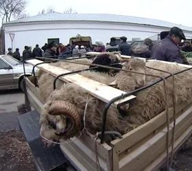 В Московской области обнаружены несколько сотен мертвых животных