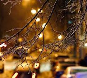 На состоянии деревьев в столице ледяной дождь не отразился