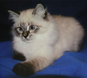 Экс-премьеру Финляндии Дмитрий Медведев подарит котенка