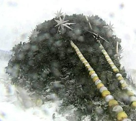 В Омске на мужчину упала новогодняя елка в пять метров