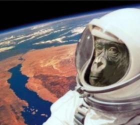 Иранская обезьяна вернулась из космоса