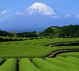 Производители чая объединились в  картель и планируют поднять цену на этот напиток