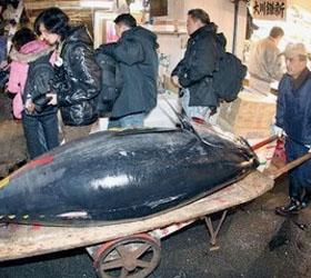 В Японии продан за два миллиона долларов гигантский тунец