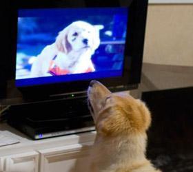 Для «лучшего друга человека» создали собственный телеканал