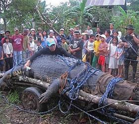 На Филиппинах умер самый большой в мире крокодил
