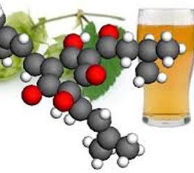 Лекарством от диабета и рака может стать пиво