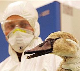 В Германии обнаружили новую эпидемию птичьего гриппа