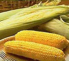 В Европе разгорится новый пищевой скандал, на этот раз из-за канцерогенной кукурузы