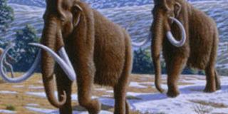 Российские ученые «воскресят» мамонтов