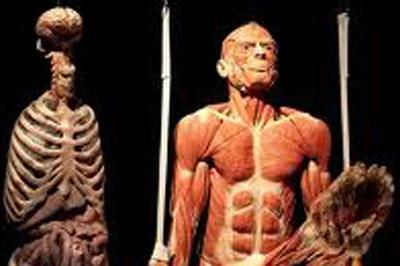 Открыт первый в мире музей с человеческими телами