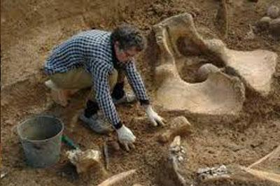 В Таджикистане нашли скелет древнего слона