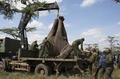 Слонов-туберкулезников спасли от смерти