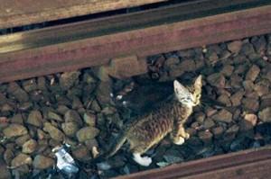 Котята остановили движение в метро