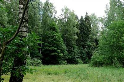 Ульяновская область занялась развитием экологии
