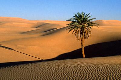 От жажды в Сахаре умерли 87 человек
