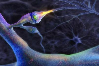 Ученые создадут молекулярную копию человеческого мозга