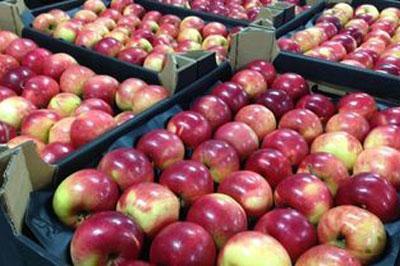 Россельхознадзор может запретить поставки овощей и фруктов из Польши