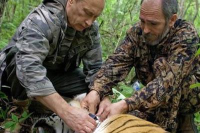 1400761988-vladimir-putin-vypustil-v-tajgu-treh-tigrov.jpg.380x253_q85_crop