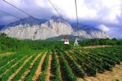 Aerial cableway above vineyards
