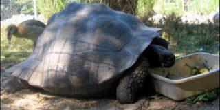 Во Флориде возникла пробка из-за огромной черепахи