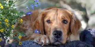 В желудке собаки лежало 43 носка