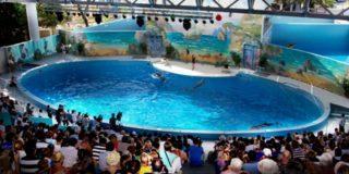 В Сочинском дельфинарии можно будет погладить крокодилов
