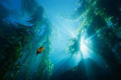 В Тихом океане фиксируют неизвестного происхождения инфразвук