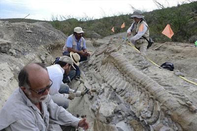 В Монголии обнаружили яйца и тушу динозавра