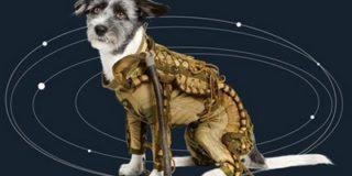 На аукционе в Германии выставлена экипировка советских собак — космонавтов