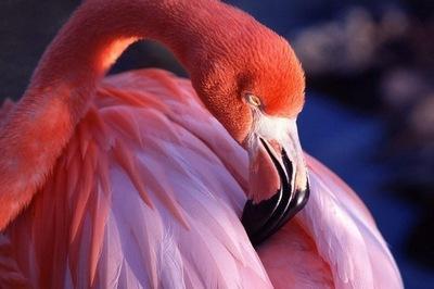 birds_life_ (25)