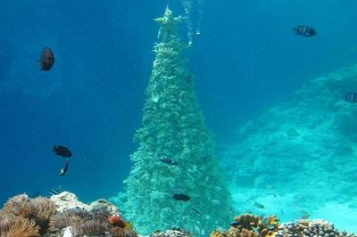 Maldivy-elka-iz-korallov