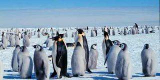 В Польше пингвин получил первый в мире протез клюва