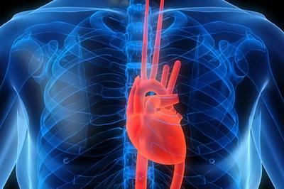 cardiovascular_
