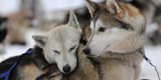 Ученые засомневались в том, что собаки произошли от волков