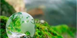 На грани разрушения экосистемы
