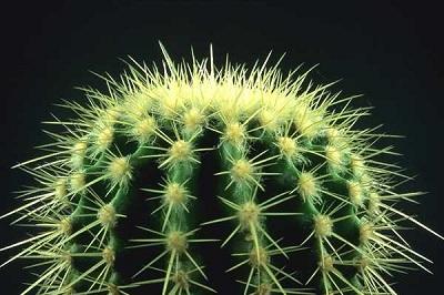 vyrashhivanie-kaktusa