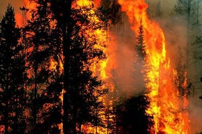 Лесной-пожар-фото-с-сайта-community.wikia_