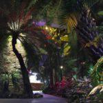 """25 и 26 февраля — вечерние экскурсии по тропикам, пустыне и полянке с подснежниками в """"Аптекарском огороде"""""""