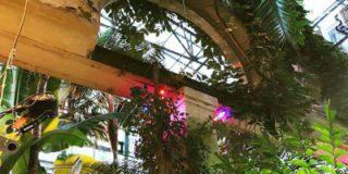 26 и 27 марта — мастер-классы, тропические экскурсии, кактус-шоу в «Аптекарском огороде»