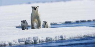 Арктический слой льда достиг рекордного минимума