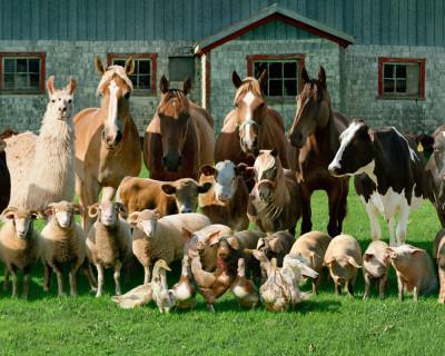 Семейная ферма – подмосковный рецепт борьбы с кризисом