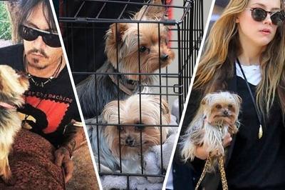 Десять лет в австралийской тюрьме - за собственных псов - могла провести супруга известного актёра