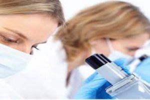 В Нидерландах разрешат выращивать эмбрионы человека для исследований
